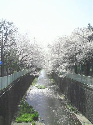 20080406-2.jpg